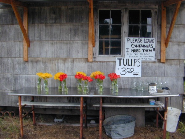 tulip-stand